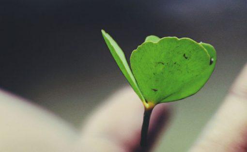 Thumbnail voor Incasso 2020 voor Bodhi: meer informatie over jouw donatie