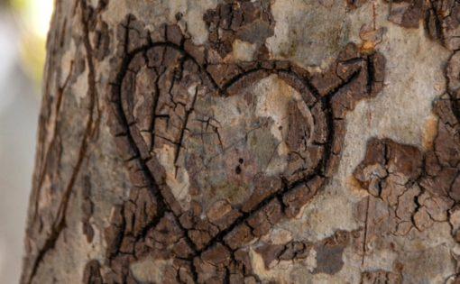 Thumbnail voor Metta: kies je voor vrije liefde of celibaat?
