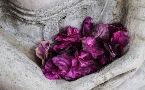 Thumbnail voor Inzamelingsactie: Bloemen in de bajes