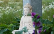 "Thumbnail voor ""Boeddha's spirituele zoektocht speelt zich af in de wildernis"""