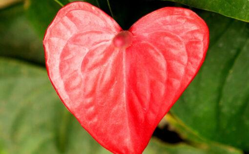Thumbnail voor Oefeningen voor het cultiveren van de vier hartkwaliteiten