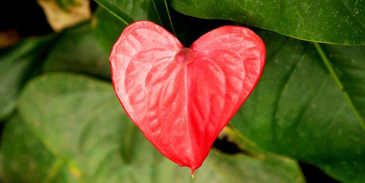 vier hartkwaliteiten in het boeddhisme